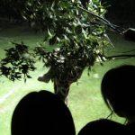 のいちdeナイト 2012 in のいち動物公園に行ってきました