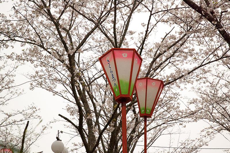高知 桜 のいち桜まつり
